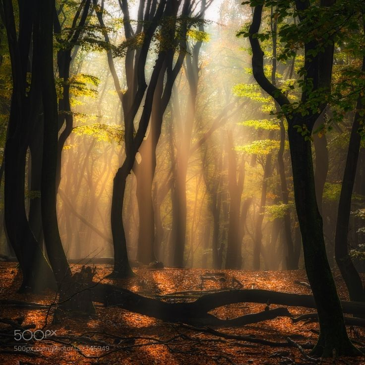 Mystic forest by Jean-FrancoisChaubard                                                                                                                                                                                 More