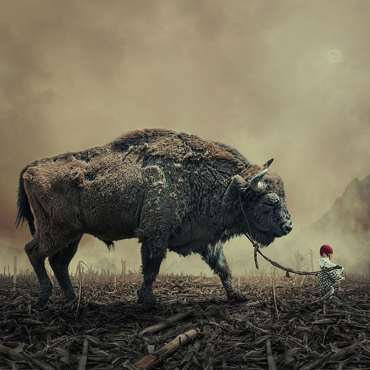 Photo Manipulations by Caras Ionut