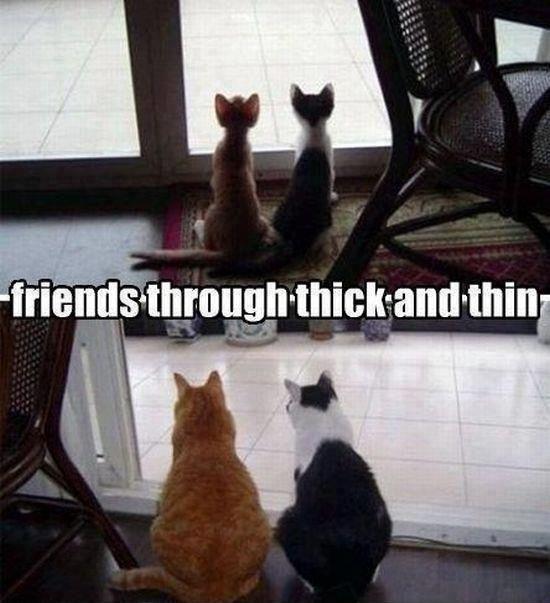 Kitty cats ^-^