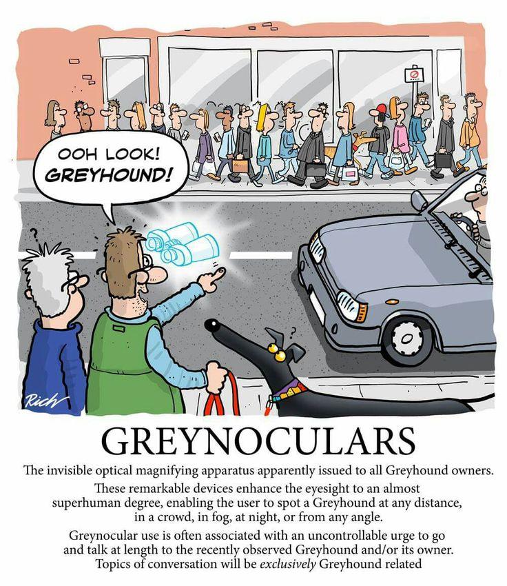 Greynoculars by Richard Skipworth
