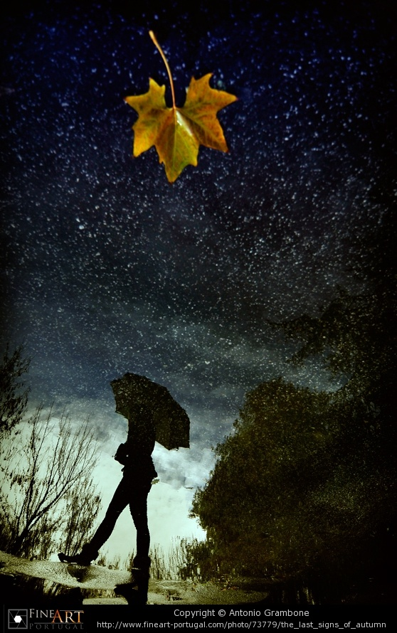 """The last signs of autumn"" by Antonio Grambone..."