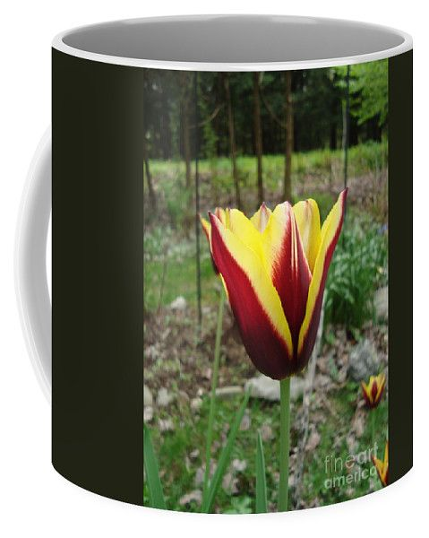 Red Coffee Mug featuring the photograph Red Yellow Tulip Gavota by Lyssjart Sj
