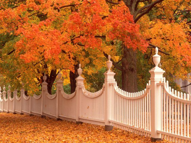 84 best fall colors images on pinterest free - Garden screensavers free ...