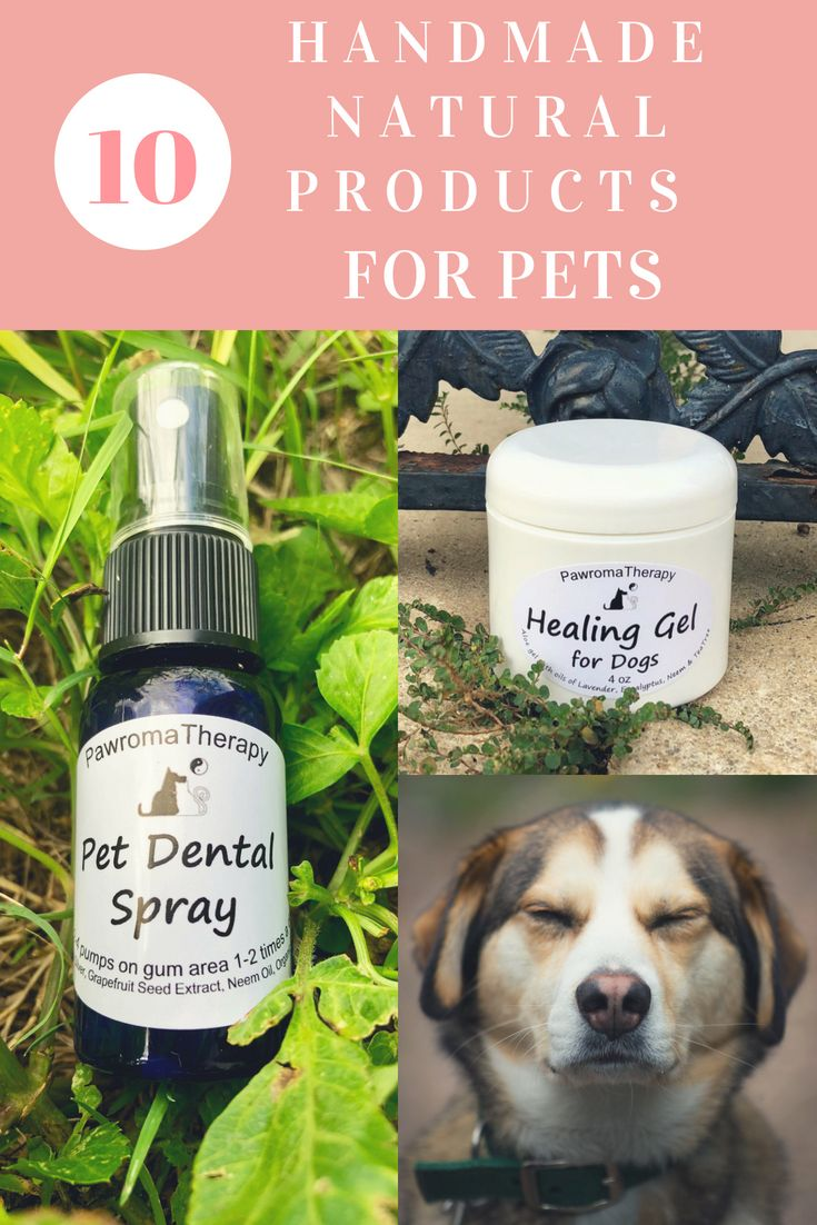 Holistic Veterinary Blog Natural Pet Pet Spray Pet Advice