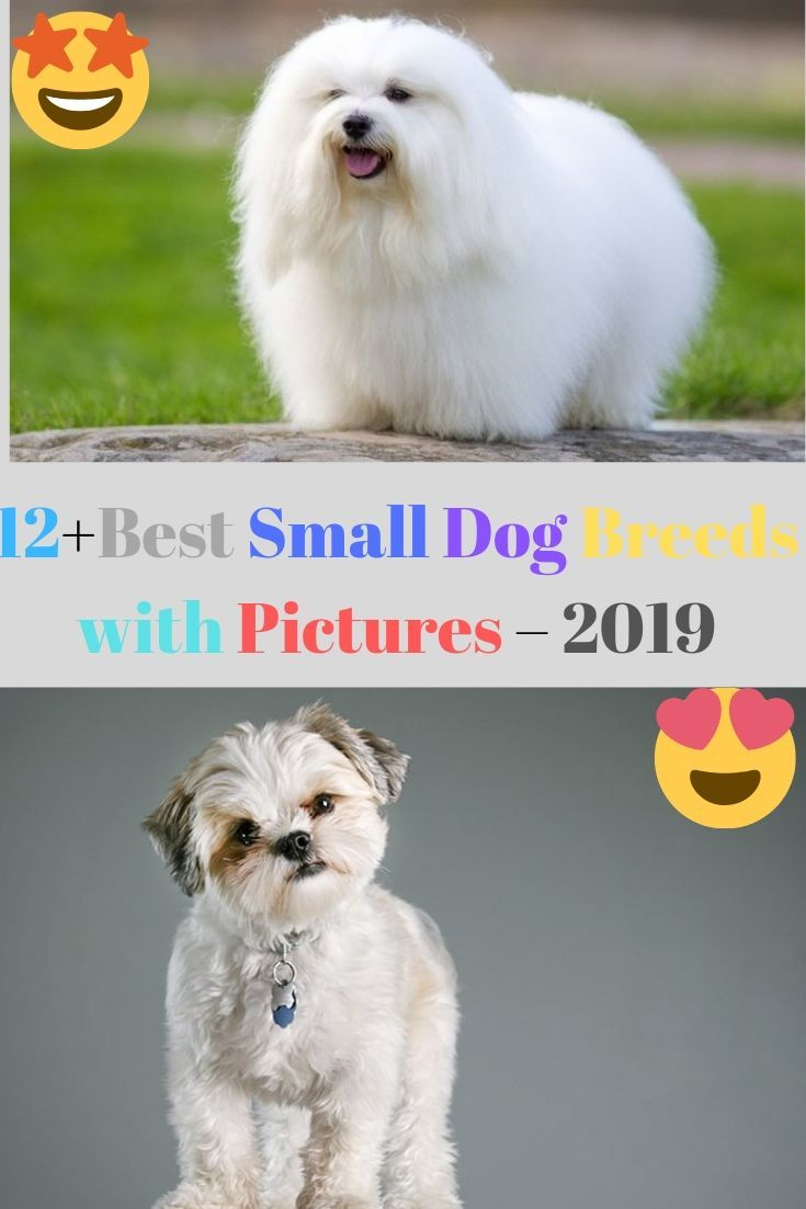 12 Best Small Dog Breeds With Pictures 2019 Dog Breeds Best