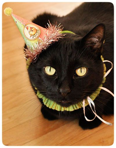 Happy Birthday Funny Black Cat Easter-Jack-in Hat by ...