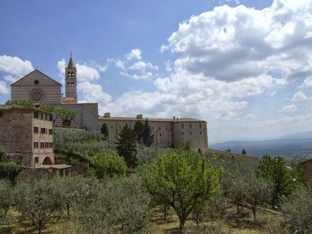 Assisi landscape with a part of St. Clare Basilica and olive trees