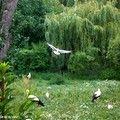 Le Parc des Cigognes à Hunawihr dans le Haut-Rhin, à voir absolument si vous passez en Alsace !