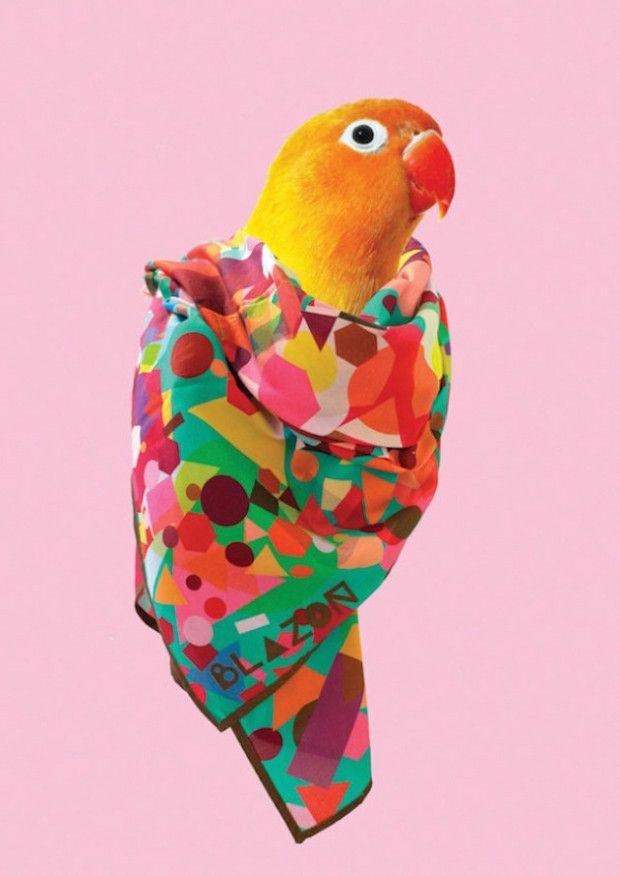 Collection de foulards Blazon by Natasha Coverdale