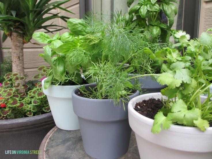 6 Best Rated Countertop Herb Garden Kit