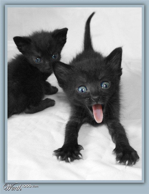 Surprise Kitteh!
