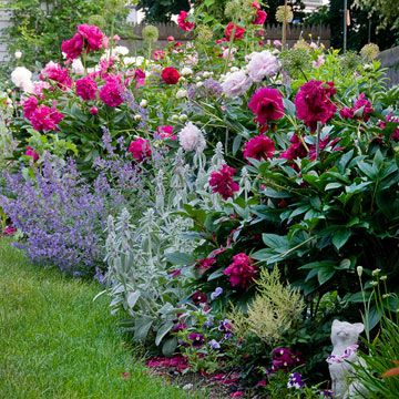 Plants with multiple petals, such as roses and peonies, are cottage-style favorites, and they have the added benefit of sweet scent. Contrast heights within beds by using spiky classics such as foxgloves and delphiniums.