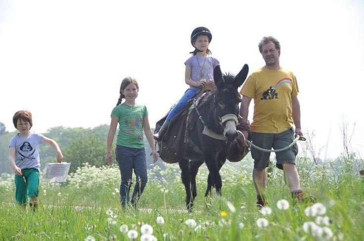 stichting de Grote ezel (non-profit) - Op stap met onze ezel(s)