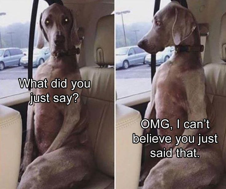 Funny Animal Pictures | Dogs