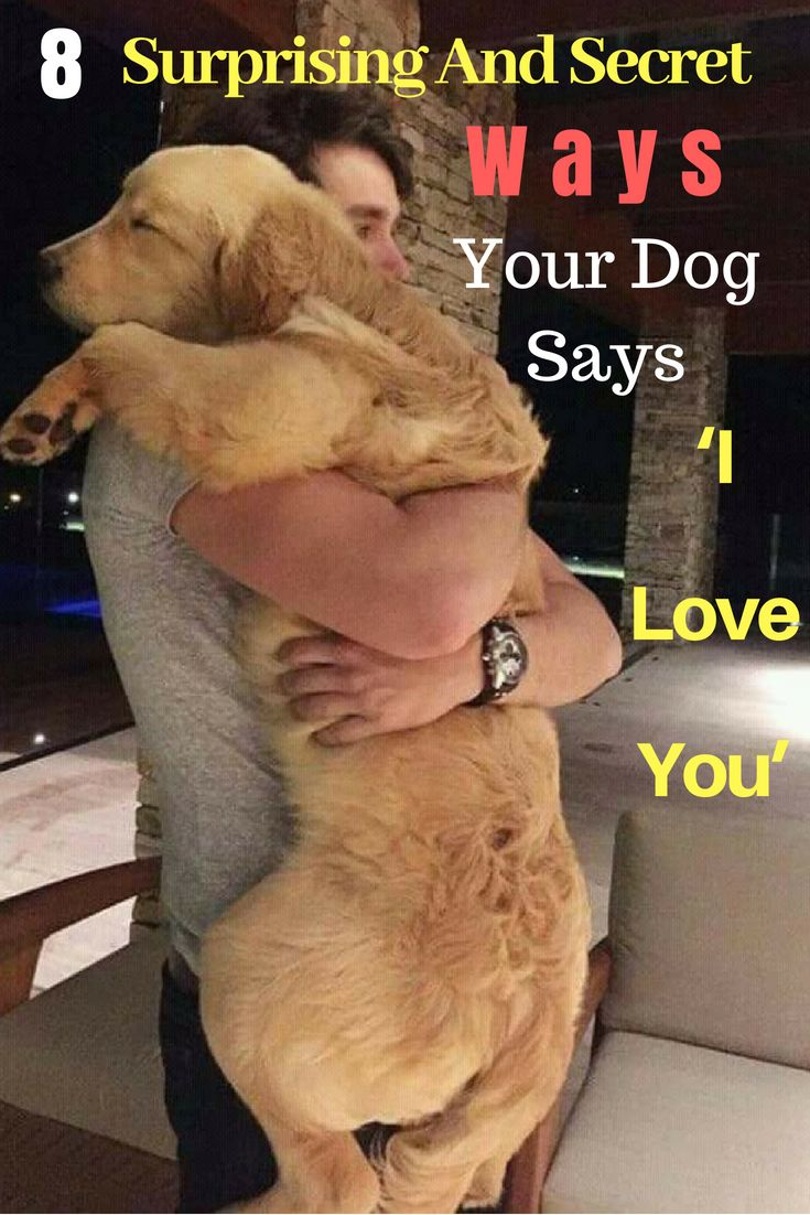 8 Surprising And Secret Ways Your Dog Says 'I Love You