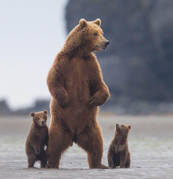 Maman et ses petits