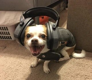 When your dog is terrified of fireworks and you put on her thunder jacket and noise canceling headphones. Happy 4th doggos! : aww