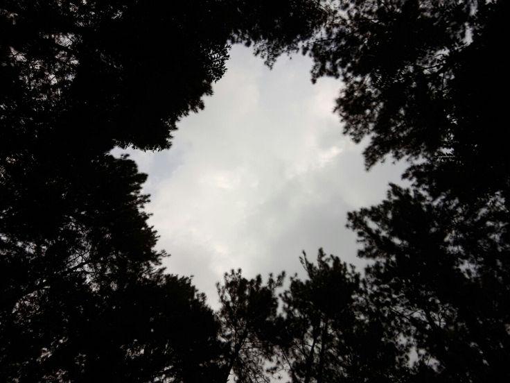 Hutan Pinus Gunung Pancar - Sentul #minggu23juli2017