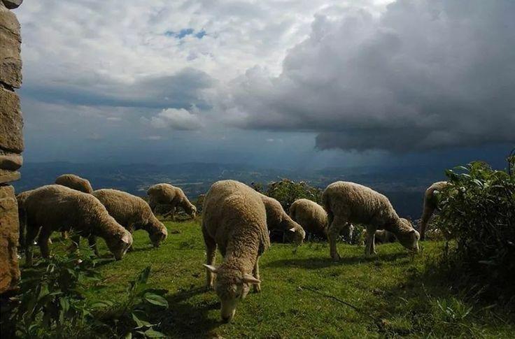 Pastoreo en los cuchumatanes