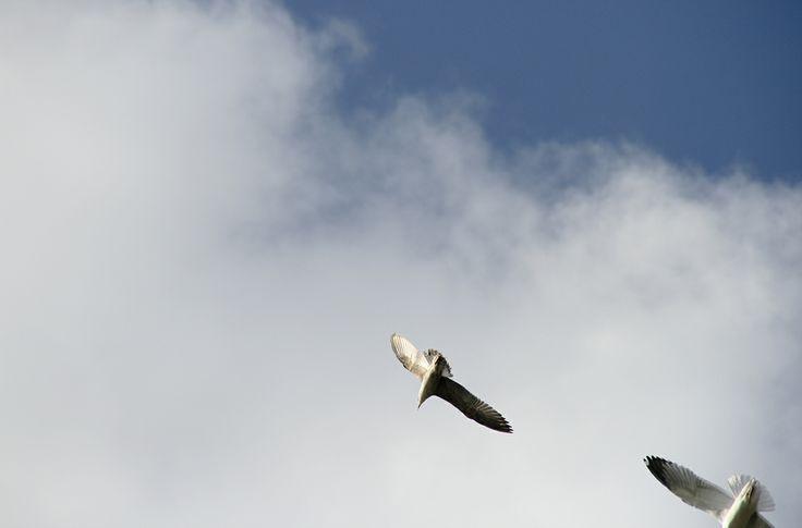 photography © Àlex Reig 2014 #photography #bird #art #seagulls