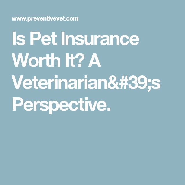 Is Pet Insurance Worth It? A Veterinarian's Perspective.