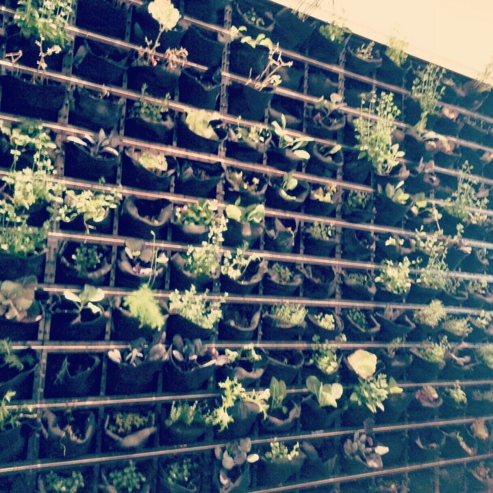 organicogran jardín huerto vertical en bolsillos maseta