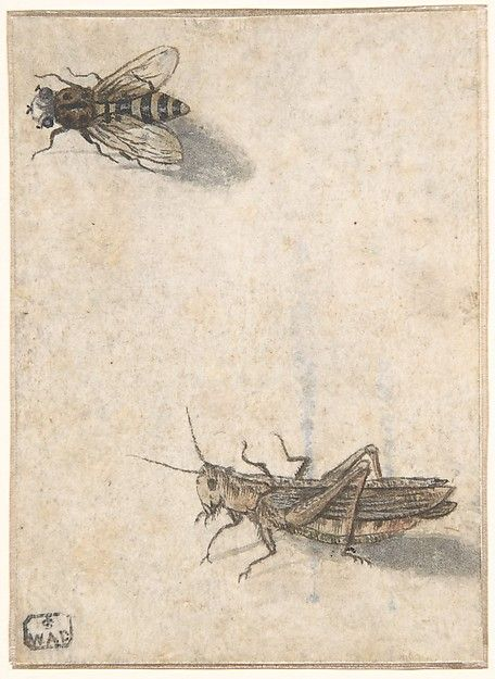 A Grasshopper and a Bee. Anonymous, Dutch, 17th century. The Metropolitan Museum of Art, New York. Bequest of Catherine G. Curran, 2008 (2008.425) #spring