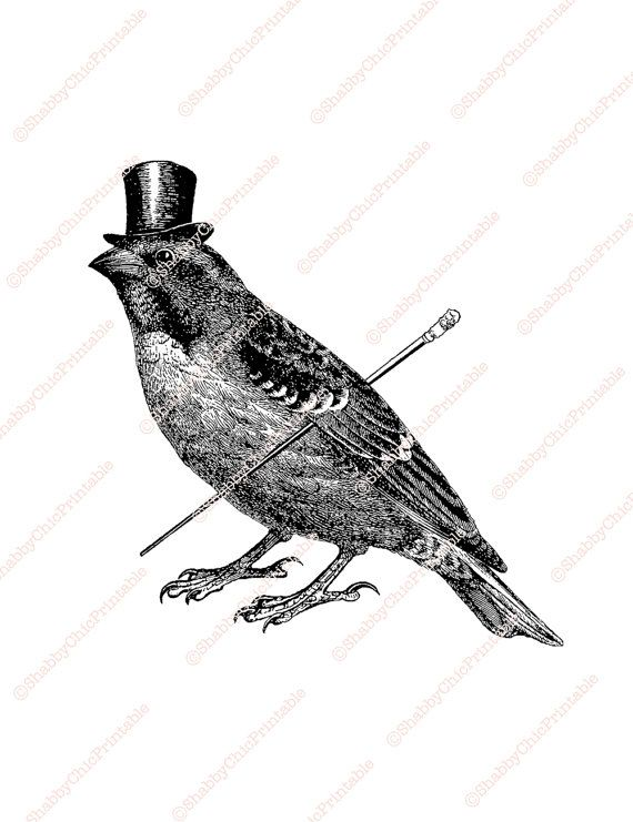 Vintage Collage Illustration Sparrow Top Hat By