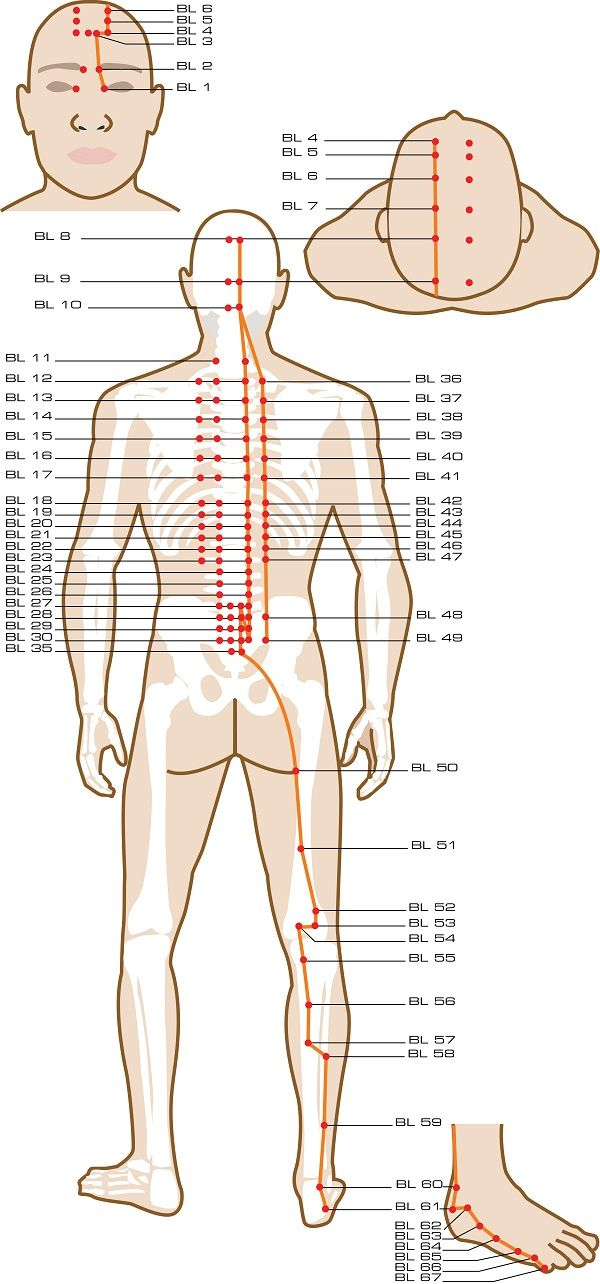Urinary Bladder Acupuncture Points