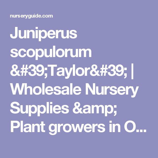 Juniperus scopulorum 'Taylor' | Wholesale Nursery Supplies & Plant growers in Oregon | Nursery Guide