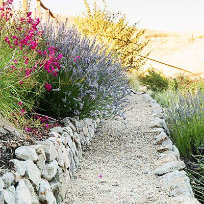 California wild lilac, yellow kangaroo paws, pink penstemon