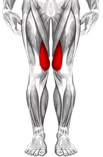 17 best images about genou on pinterest knee pain for Interieur cuisses