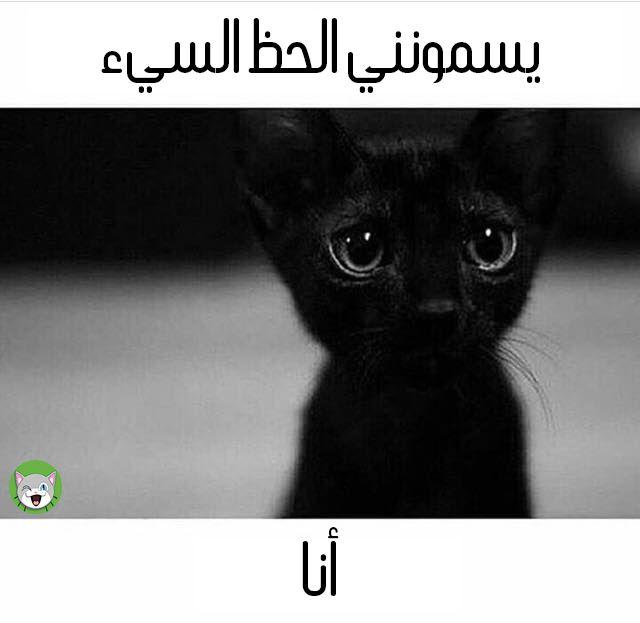 Pin On روعة القطط السوداء