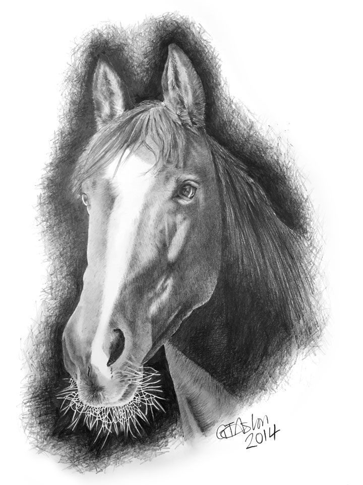I undertook a Horse drawing for a client, here's the resulting drawing.
