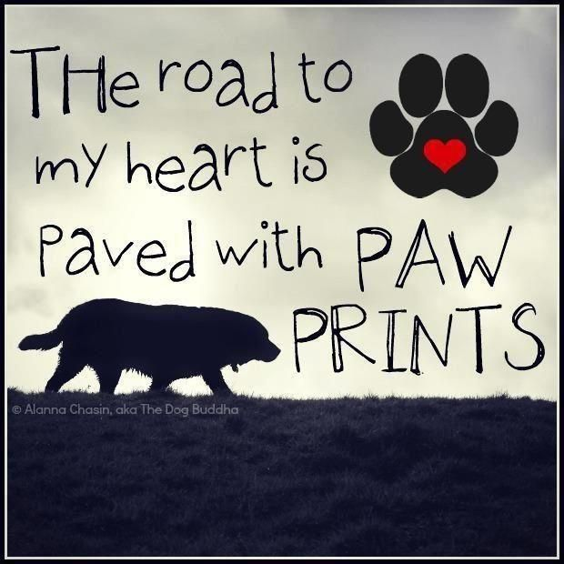 Dog's leave paw prints on our hearts <3