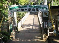 長野県小諸市にある小諸市動物園は小諸城跡の懐古園の中にある動物園です 1926大正15年に日本で4番目の動物園として開園されて以来の長い歴史を刻んでいます 当初は日本ザル1種の飼育からスタートしましたが今ではライオンやツキノワグマなど約80種類の動物が顔を揃えています 長生きしている動物が多く人間に換算すると80歳を超えるベニコンゴウインコやチリーフラミンゴなどを見ることができます  tags[長野県]