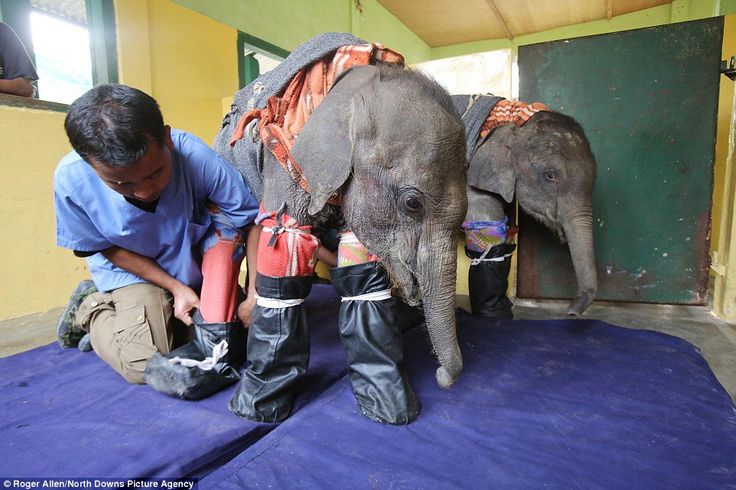 Awesome Vet Comes Up With Genius Idea to Help Tramatized, Orphaned Elephants (PHOTOS)