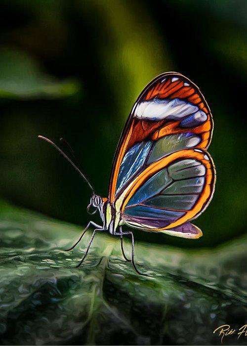 Метелики бабочки скачать бесплатно mp3