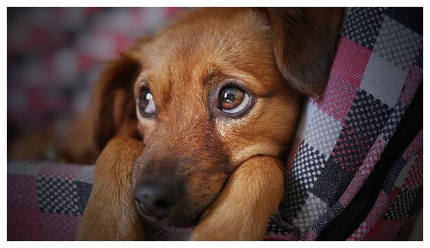 Dog Racing Tips Sheffield Puppy Proofing Dogs Free Puppies