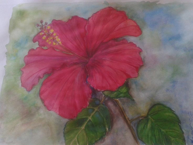 Hibiscus watercolours #more2art, #watercolor
