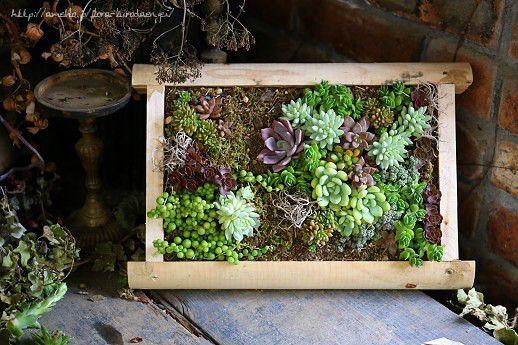 多肉植物|フローラのガーデニング・園芸作業日記-5ページ目