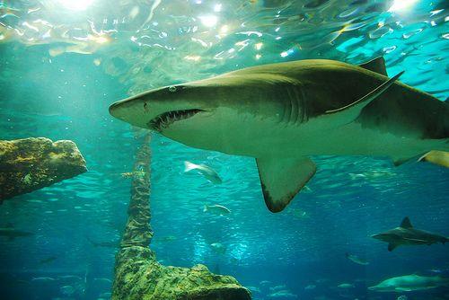 Espana- Tourist Attracrions- Barcelona Aquarium