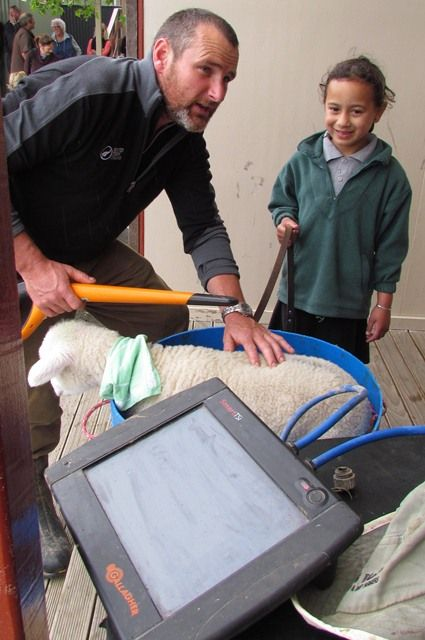 Matt Wyeth helps seven-year-old Poppy-Rose Wallace weigh Ma the lamb at the Fernridge School Pet Day