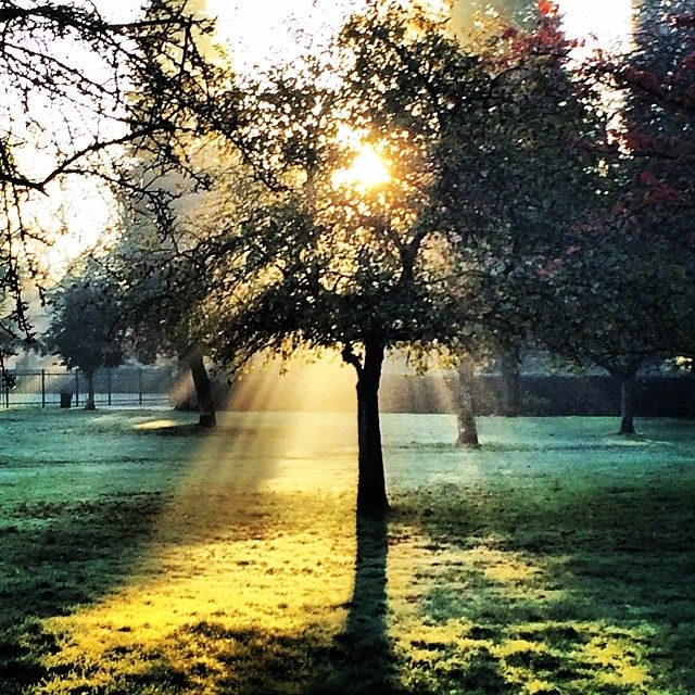 #didsbury#park#sun#sunrise#trees#shadows#grass#branches#early#morning