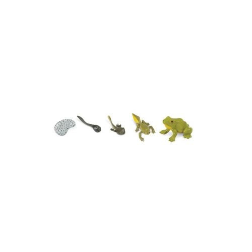 Frog Life Cycle Stage Figures - Life Cycle Figurines