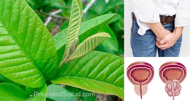 Hoja Milagrosa Para Tratar El Cáncer De Próstata Cholesterol Remedies Cholesterol Symptoms Healthy Cholesterol Levels