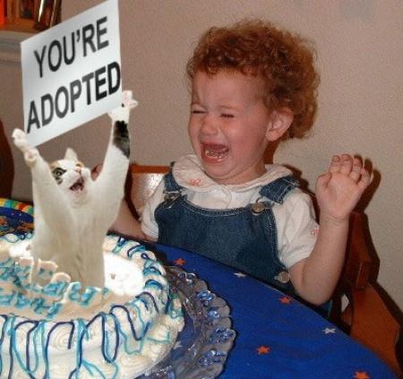 you're adopted birthday cake lol cat macro
