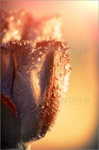 Konstantin Sevostyanov - Sun Rays Flower