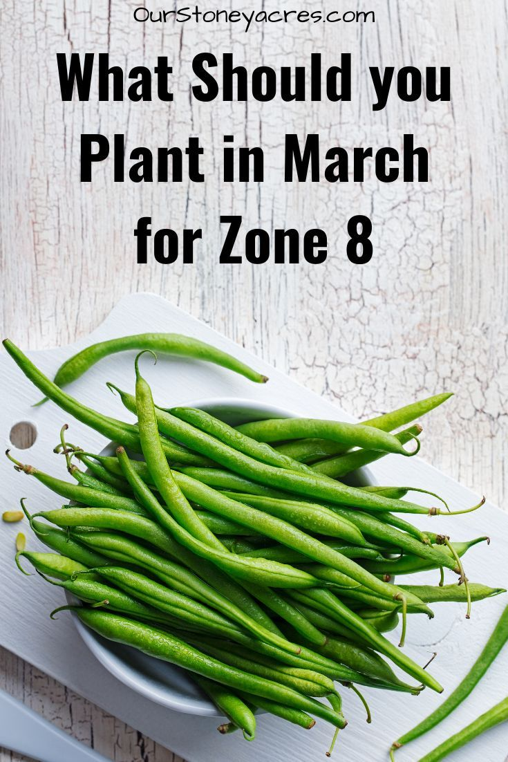 Gardening In March Zone 8 In 2020 With Images Food Garden