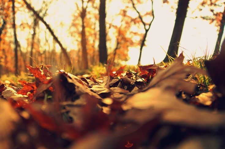 Annoying Leaves? Heres How to Dispose of Fall Leaves
